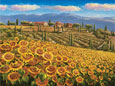 Sam Parks Tuscany Sunflower